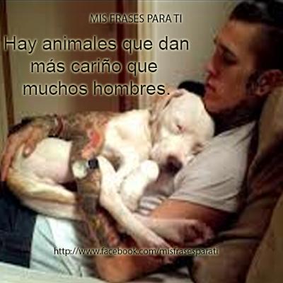Hay animales que dan más cariño que muchos hombres.