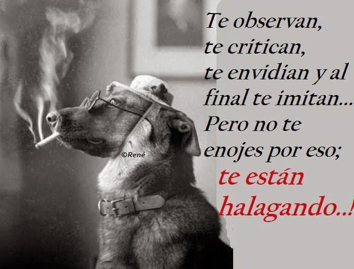 Te Observan Te Critican Te Envidian Y Al Final Te Imitan