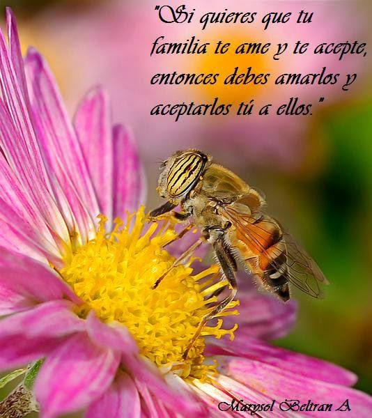 Si quieres que tu familia te ame y te acepte, entonces debes amarlos y aceptarlos tú a ellos.