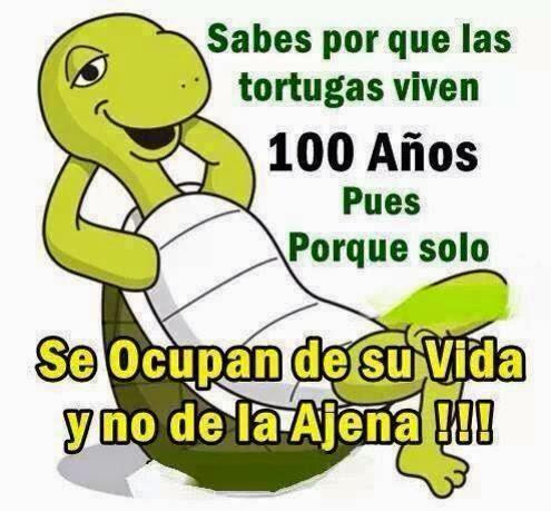 Sabes por que las tortugas viven 100 años. Pues porque solo se ocupan de su vida y no de la Ajena.