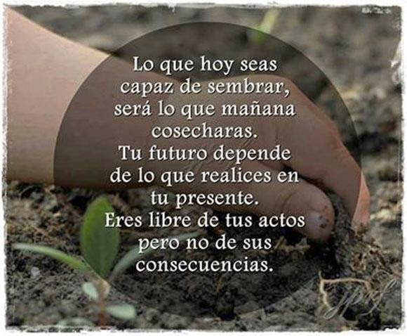 Frases de reflexión, capaz, sembrar, mañana, cosecharas, futuro, presente, libre, actos, consecuencias.