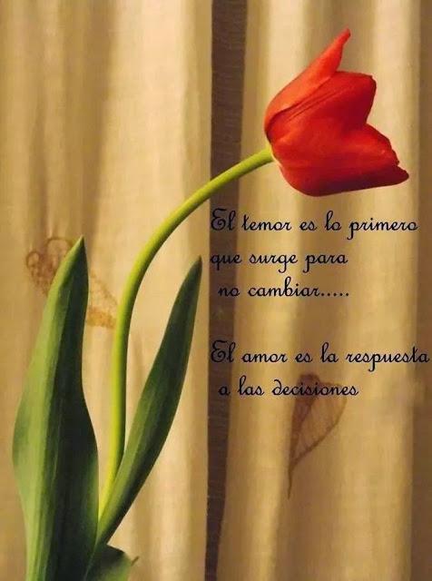 Frases de reflexión, temor, primero, surge, cambiar, amor, respuesta, decisiones.