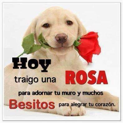 Hoy traigo una Rosa para adornar tu muro y muchos besitos para alegrar tu corazón.