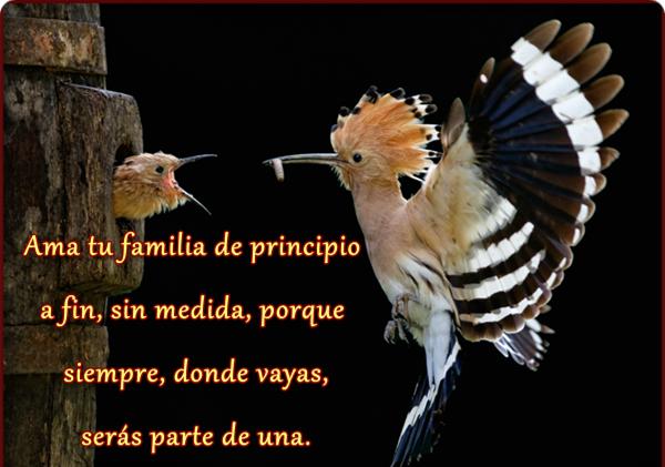 Ama Tu Familia De Principio A Fin Mis Frases Para Ti