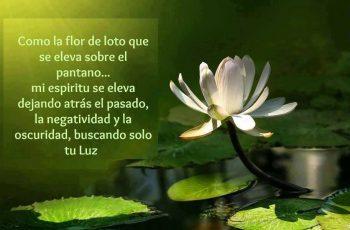Como la flor de loto que se eleva sobre el pantano - Frases de reflexión