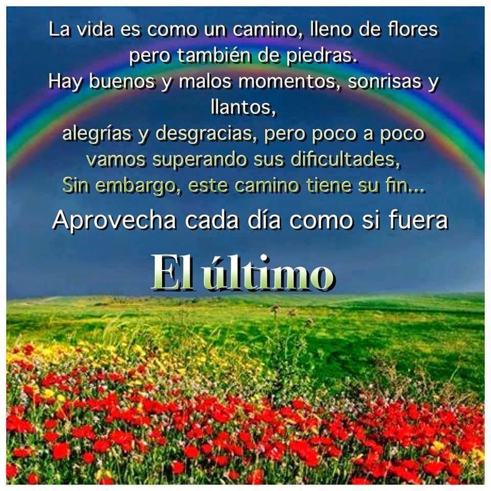La vida es como un camino, lleno de flores pero también de piedras. Hay buenos y malos momentos, sonrisas y llantos, alegrías y desgracias, pero poco a poco vamos superando sus dificultades, sin embargo, este camino tiene su fin. Aprovecha cada día como si fuera EL ÚLTIMO