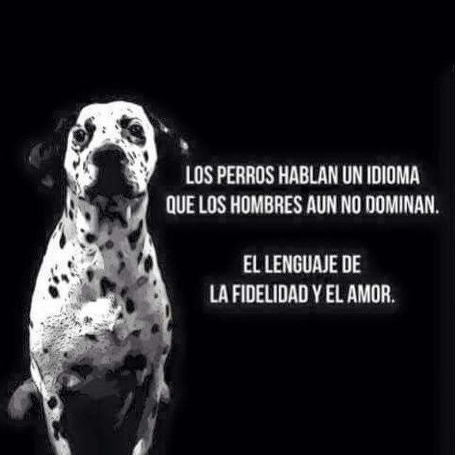 Los perros hablan un idioma que los hombres aún no dominan. El lenguaje de la felicidad y del amor.